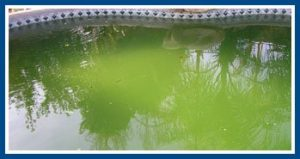 Cleaning A Green Pool